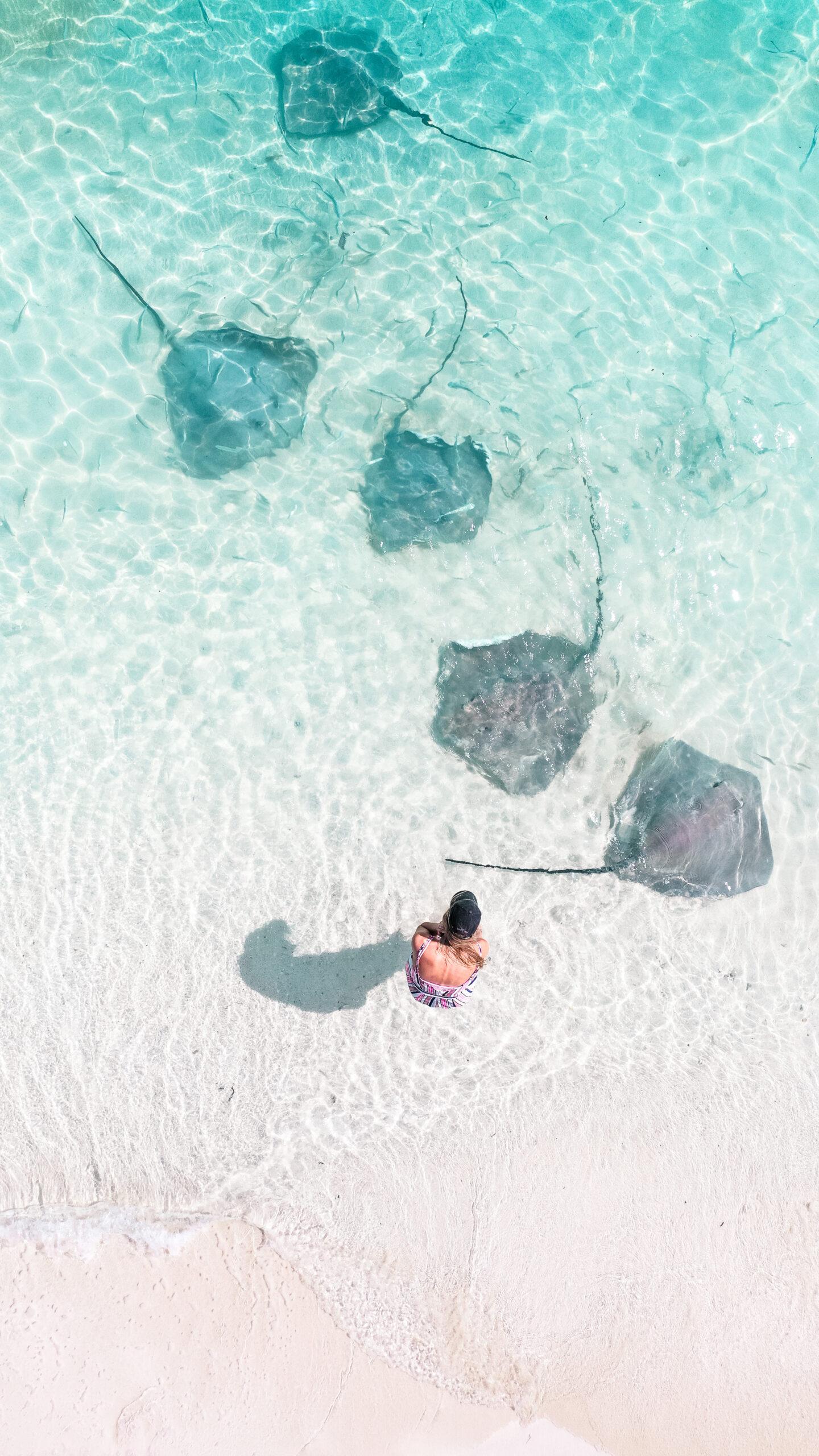 Pijlstaartroggen Malediven