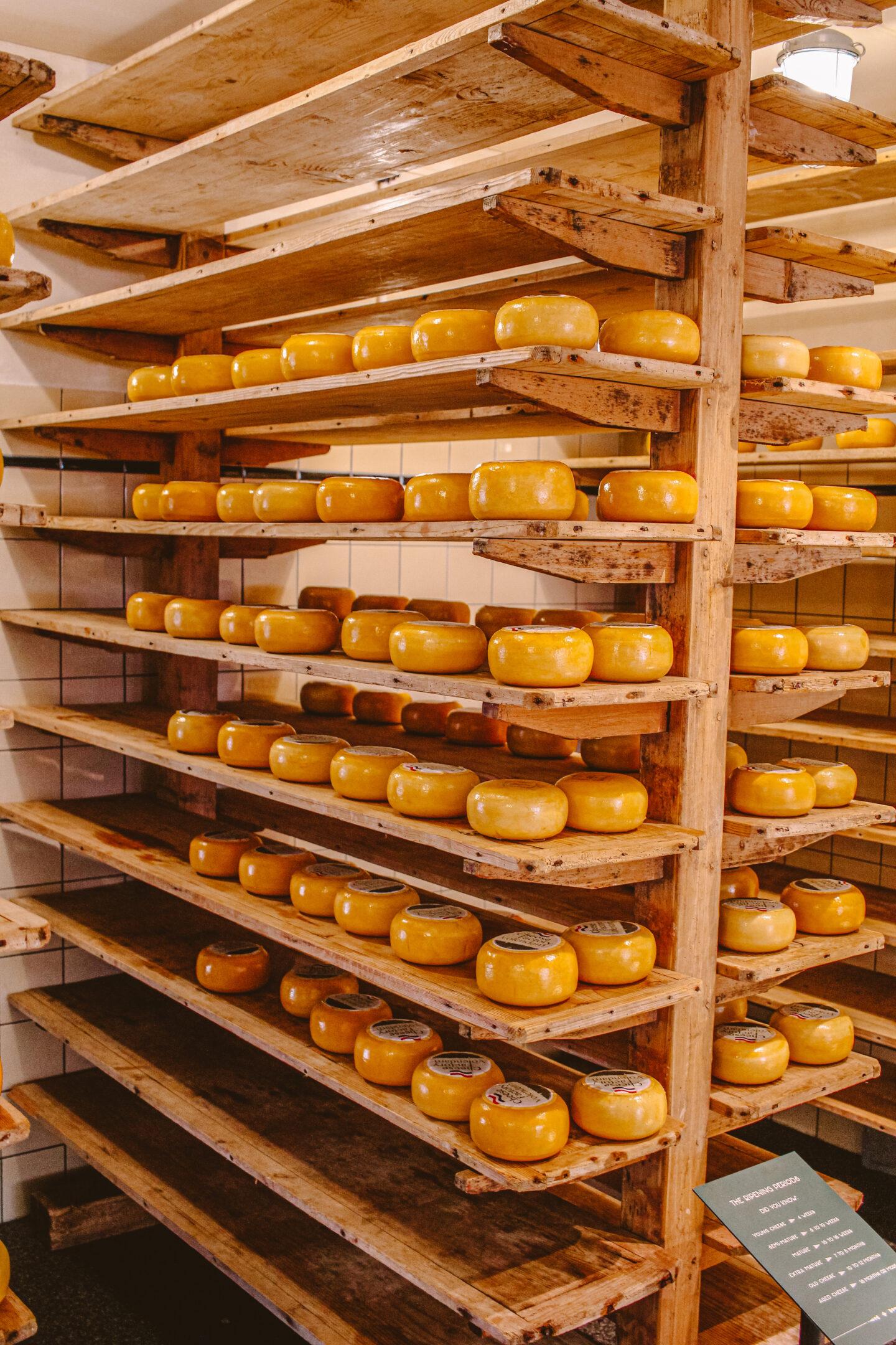 Cheese factory Volendam activiteiten