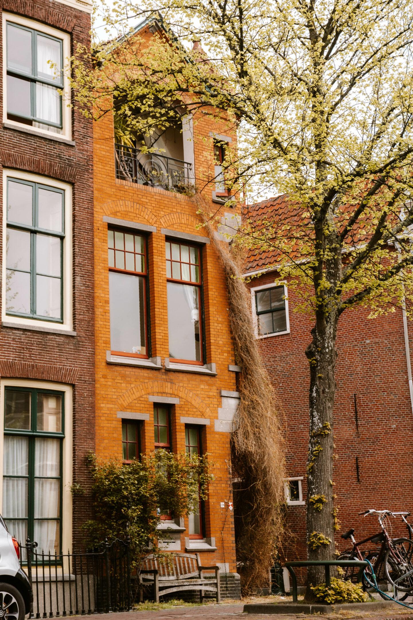 Stadwandeling Leiden